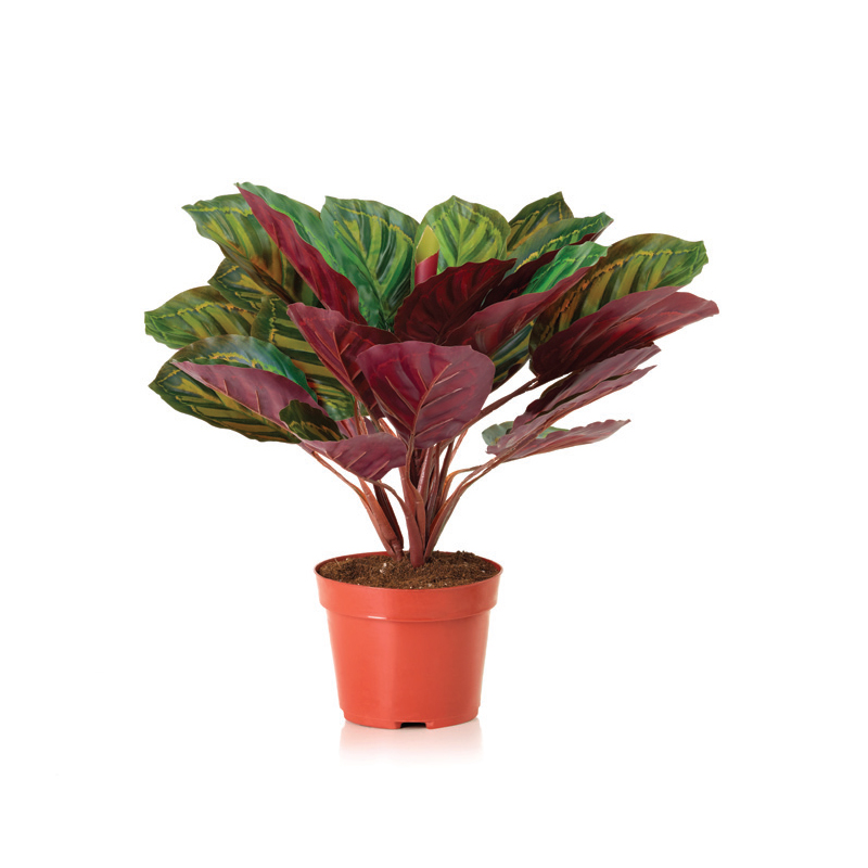 Buy Artificial Plants Dubai Real Feel Plants