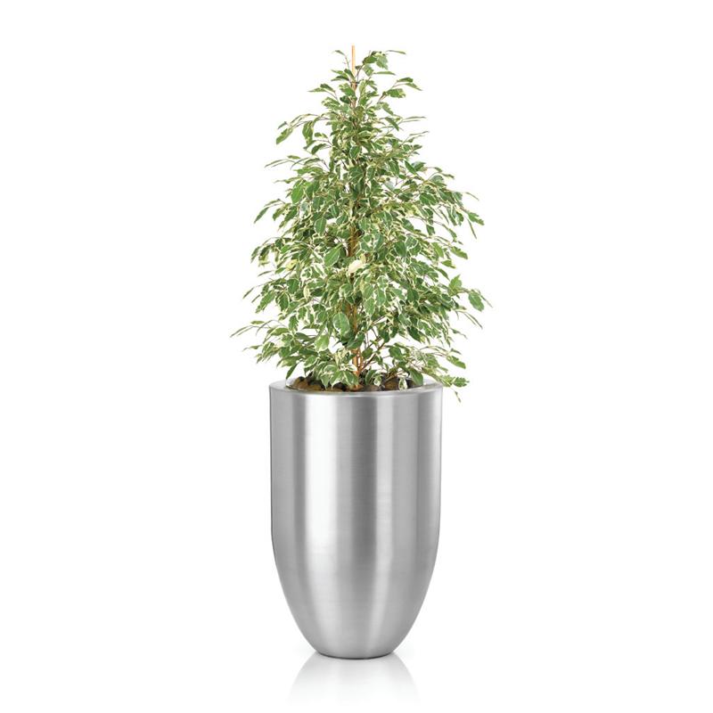 star-light-plant